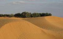(043)Djerba2008